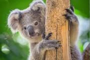 گونههای جانوری در استرالیا نیاز به کمک فوری دارند