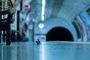 عکس سال حیات وحش: جنگ موشها در متروی لندن