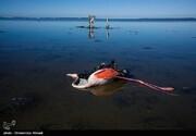 دامپزشکی گلستان: بوتولیسم علت مرگ پرندگان در خلیج گرگان است