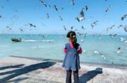 تصویر   پرندگان دریایی در سواحل بوشهر