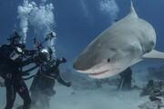 موجودات دریایی خطرناک در کمین غواصان جزیره کیش