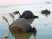 فاجعه زیست محیطی؛ سالانه ۵۶۰۰ کیلوگرم سرب وارد تالاب میانکاله میشود