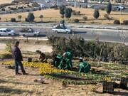 آمادهسازی نوروزی تهران به روایت تصویر