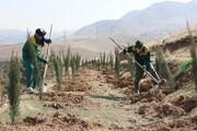 کاشت ۱۵هزار نهال در بوستان جنگلی سرخهحصار