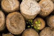 ۲ تن چوب قاچاق در گچساران کشف شد