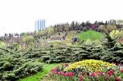 همه اقدامات نگهداشت بهارانه تهران سبز در زمانه کرونا | این روزها چگونه گیاهان شهر را نجات دهیم؟