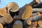 کشف ۵۰۰ تن چوب قاچاق در اصفهان