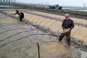 خزانهگیری شالیزارهای گیلان بر اساس تقویم زراعی آغاز شد