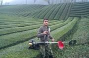 تمدید مهلت پرداخت تسهیلات بهزراعی و بهسازی به چایکاران شمالی