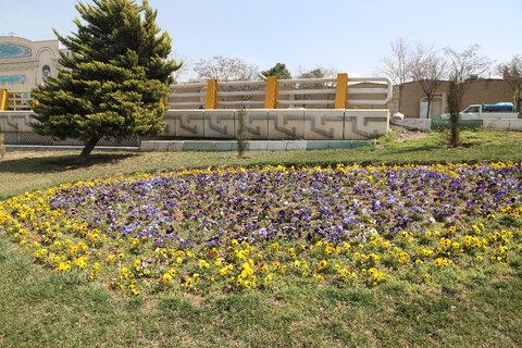 کاشت گل های بهاری در منطقه۱۳