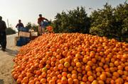 کاهش قیمت پرتقال شب عید در خراسان شمالی