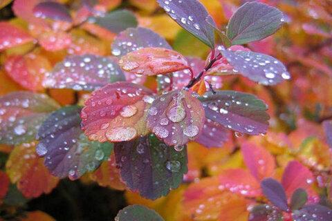 بارشها تا ۱۸ فروردین ادامه دارد