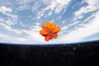 گل در فضا-1