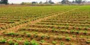 اجرای الگوی کشت بهاری کشاورزی در چهارمحال و بختیاری ضروری است