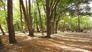 تعطیلی پارکها و جنگلها در روز طبیعت   ضدعفونی میشوند