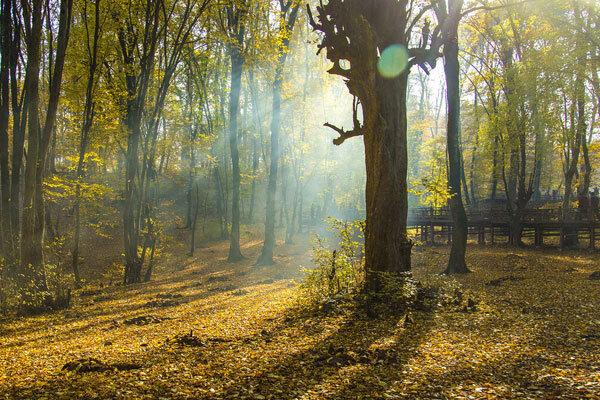 جنگل های گلستان