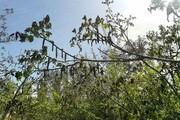 خسارت سرمازدگی به ۱۲۵۰ هکتار از باغهای لردگان