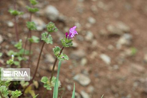 رویش گلهای طبیعی بهاری