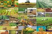 روستا، کانون مهم تولید در تحقق شعار سال