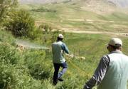 مبارزه با ملخها در ۳۶۸۰ هکتار از عرصههای استان بوشهر