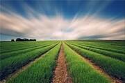 توصیههای ۱۵ بندی هواشناسی به کشاورزان