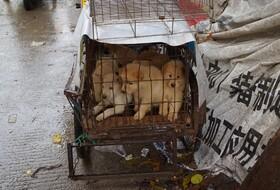 کرونا به داد جانوران رسید | خوردن گوشت سگ و گربه در چین ممنوع شد