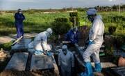 آمار مبتلایان به کرونا در جهان از ۹ میلیون نفر گذشت | آمار قربانیان ایران پنجرقمی میشود