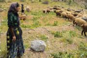 شرایط برای سکونت عشایر در گچساران و باشت فراهم شد