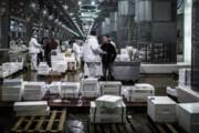 کرونا در فرانسه | سردخانه مواد غذایی ؛ محل نگهداری اجساد | هشدار درباره عوارض داروها