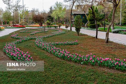 جشنواره لالههای کرج