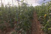 کشاورزی قزوین ۳ هزار میلیارد ریال تسهیلات  گرفت