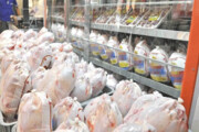 شیوع بیماری کرونا قیمت مرغ  را در بازار قزوین کاهش داد