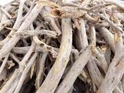 رئیس منابع طبیعی دامغان: ۸.۴ تن چوب تاغ قاچاق کشف شد
