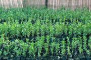 کاشت ۲۵ گونه نهال در بزرگترین نهالستان گرمسیری کشور در مهران