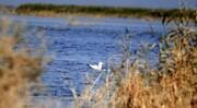 باران تالابهای خوزستان را احیا کرد | افزایش جمعیت پرندگان مهاجر در خوزستان