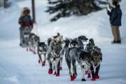 تصاویر | سورتمهرانی با سگ در طبیعت رویایی آلاسکا