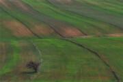 اجرای طرح تاک برای حفظ دشت قزوین