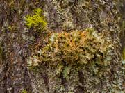 موثرترین درخت در کاهش آلودگی صوتی شهرها