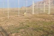 بیانیه سازمان محیط زیست درباره فرآیند انتقال جنجالی یوزپلنگهای پارک پردیسان