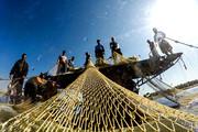 تقویم ممنوعیت صید در آبهای هرمزگان اعلام شد