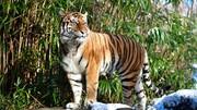 ابهامهای علمی جدید در نبرد گربهسانان با کووید-۱۹