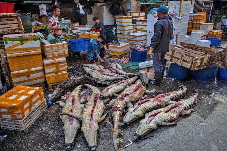 بازار فروش جانوران زنده در ووهان چين