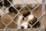 ساخت پناهگاه حیوانات بدون صاحب در یزد