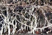 هشدار هواشناسی درباره سرما و یخبندان در خراسان جنوبی