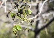 هشدار هواشناسی سمنان نسبت به سرمازدگی محصولات کشاورزی