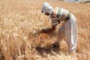 ممنوعیت خرید توافقی گندم در خوزستان