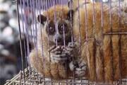 درخواست از سازمان بهداشت جهانی برای تعطیلی بازارهای فروش حیوانات زنده