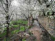 ضیافت شکوفه های بهاری