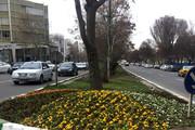 گلکاری برای تقویت روحیه شهروندان تبریزی