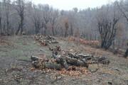 دستگیری ۱۰ نفر از تخریبکنندگان جنگلهای مریوان